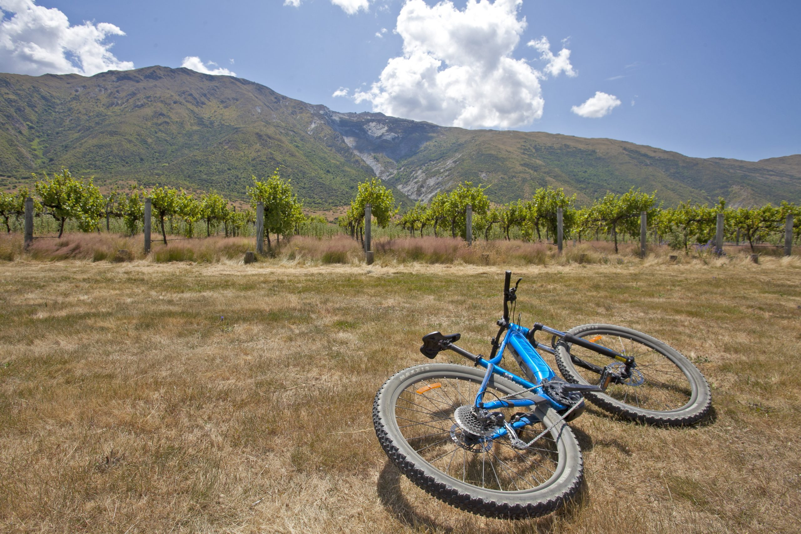 Blue ebike on the ground at the Gibbston Valley wine region on a summers day in front of the vineyard