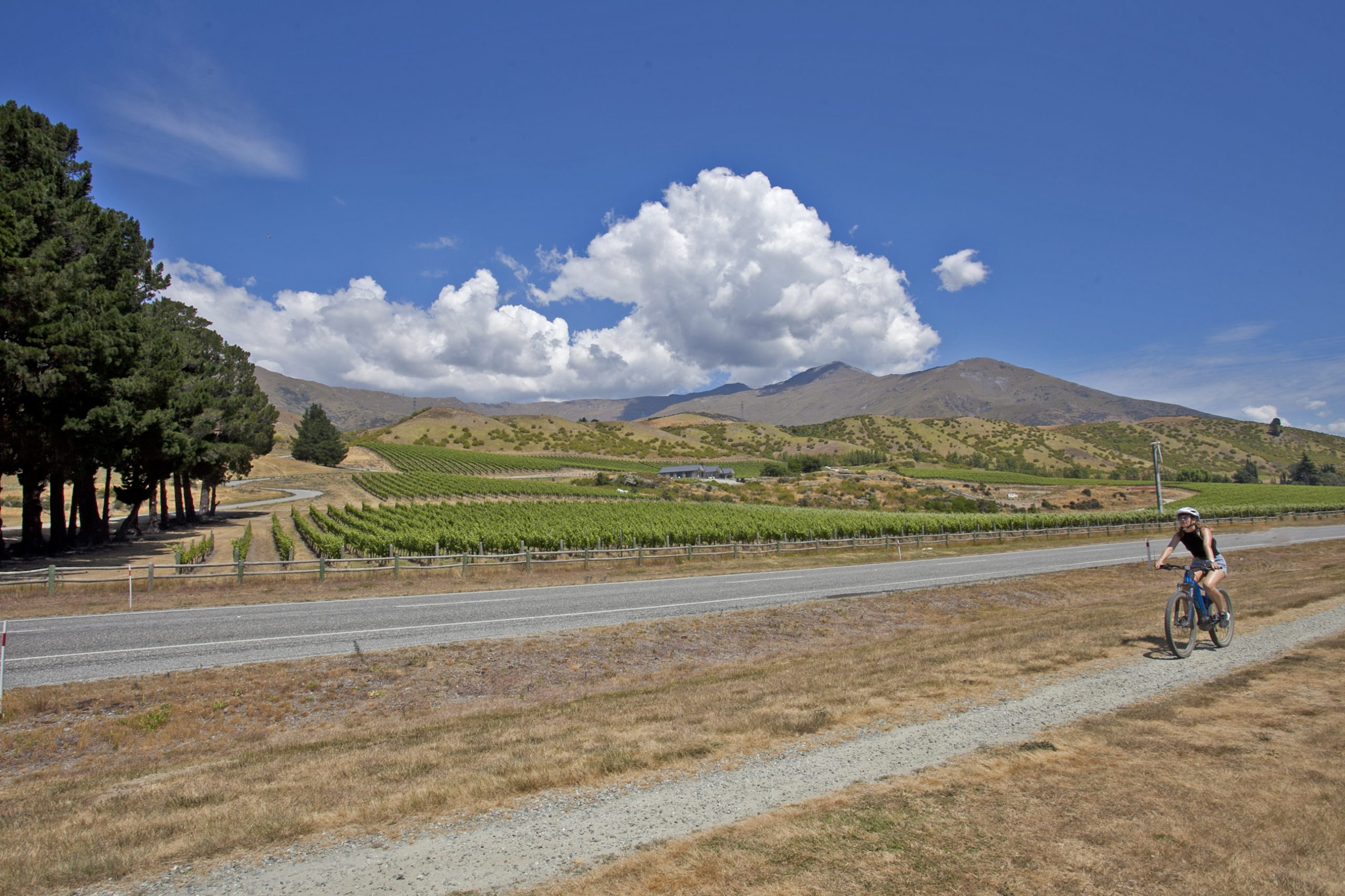 Blue sky riding a electric bike into the Gibbston Valley winery. A bike trail leads the way on a summers day